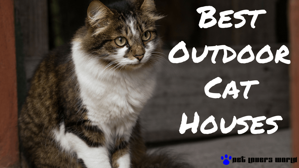 Which Outdoor Cat House To Buy A Helpful Guide Pet Lovers World