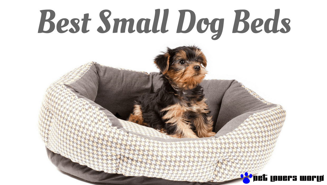What Are The Best Dog Beds For Small Dogs