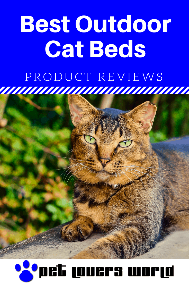 Looking For The Best Outdoor Cat Bed For Your Feline