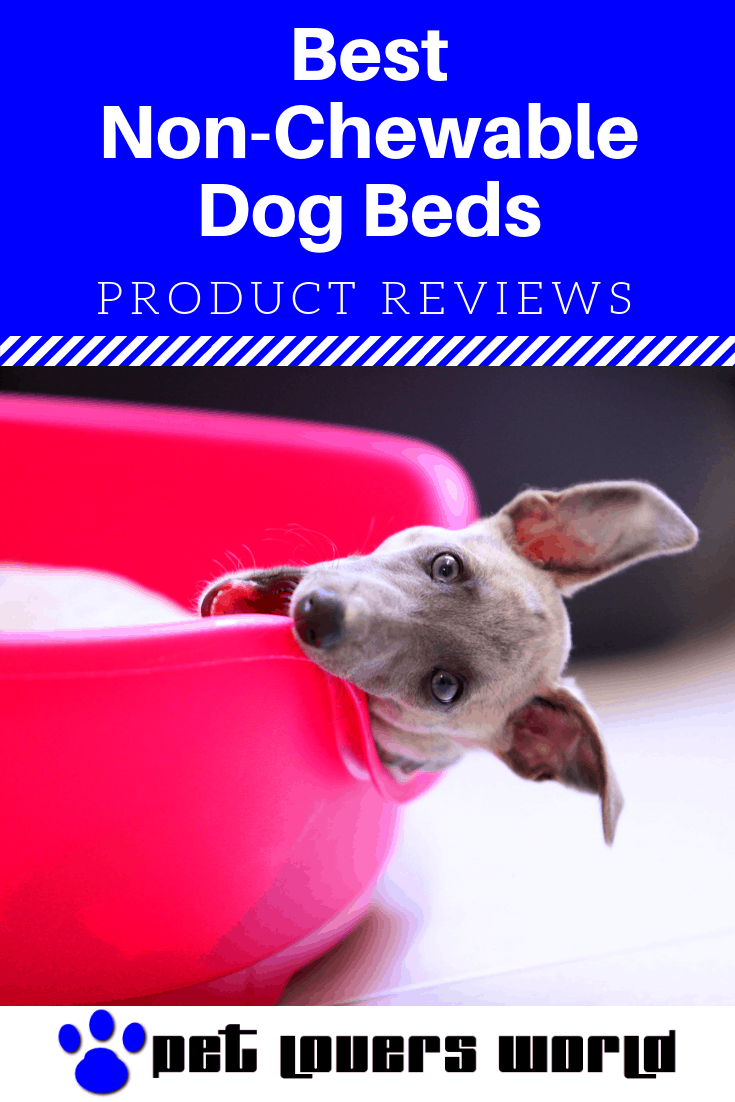 Best Non Chewable Dog Beds Reviews Pinterest Image