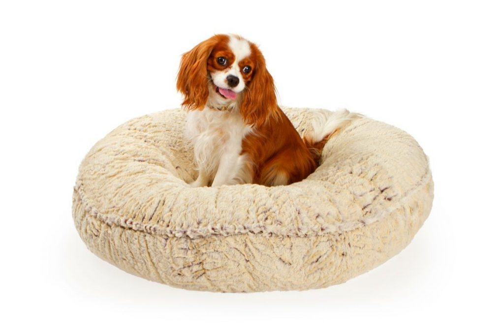 Best Donut Dog Beds Reviews Featured Image