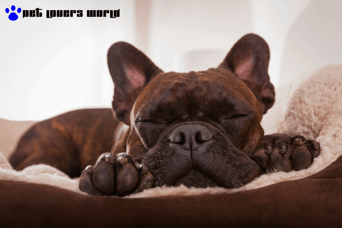 Best Dog Beds On The Market Reviews