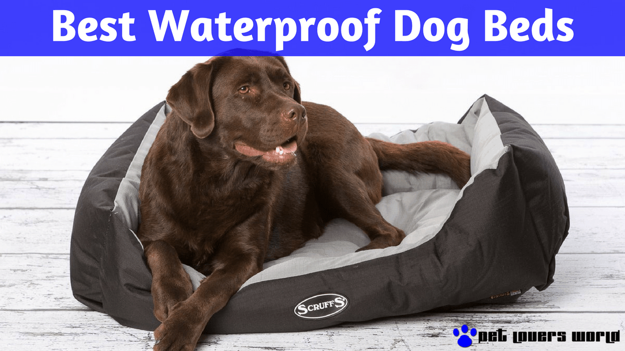 What Is The Best Waterproof Or Water Resistant Dog Bed