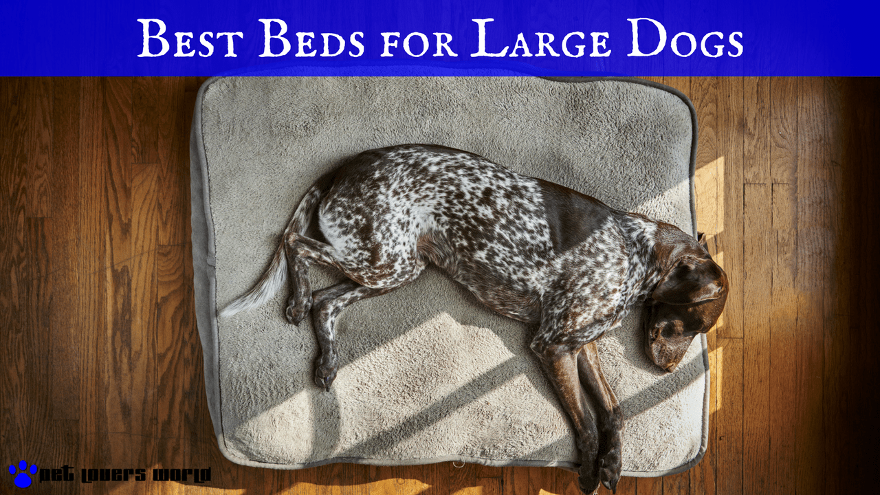 the best large dog beds for the money pet lovers world With best dog bed for the money