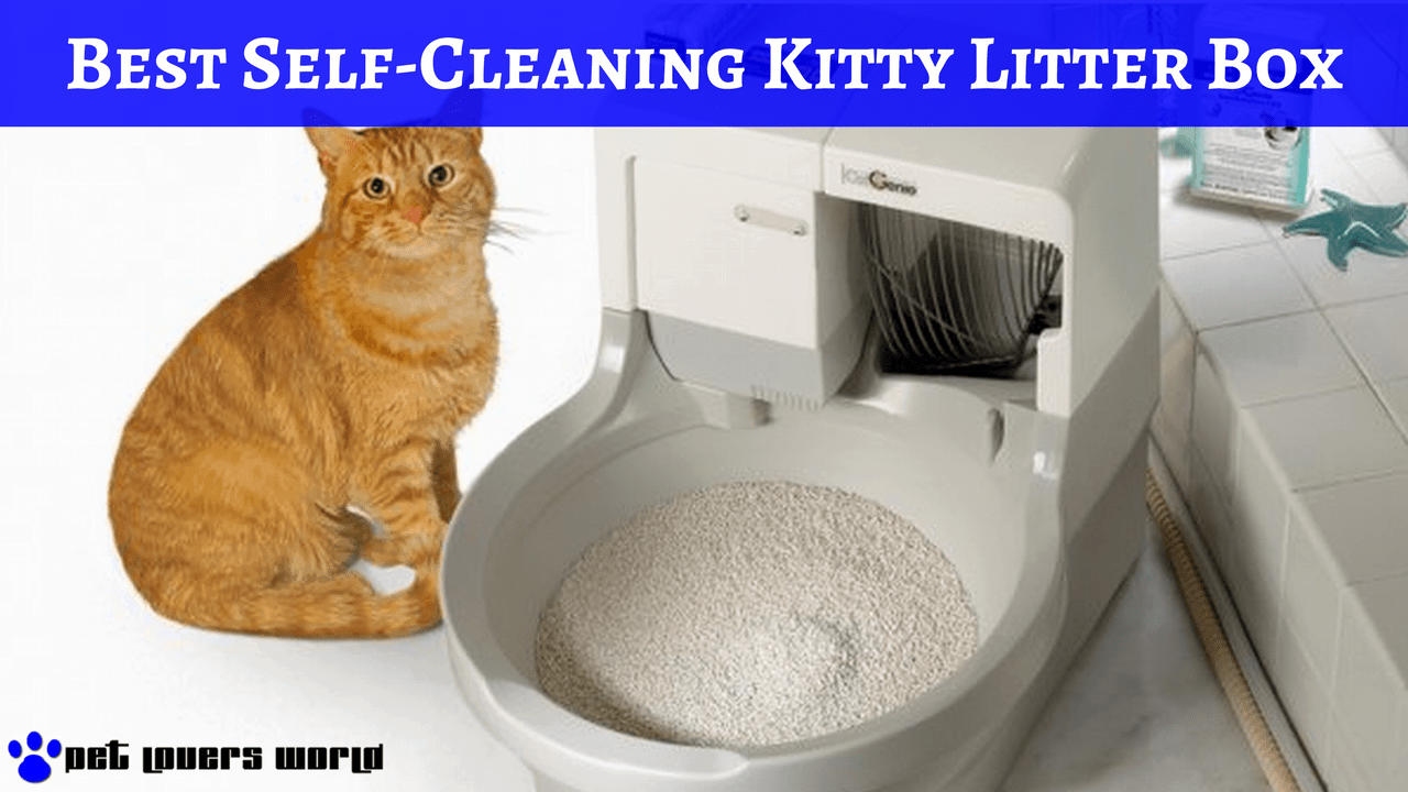 Self Cleaning Litter Box For Large Cats