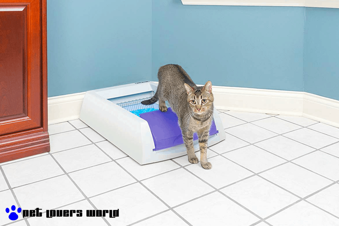 Best Automatic Self Cleaning Litter Box Reviews