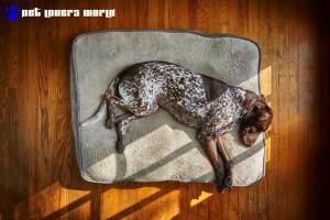 Best Large Dog Bed Reviews