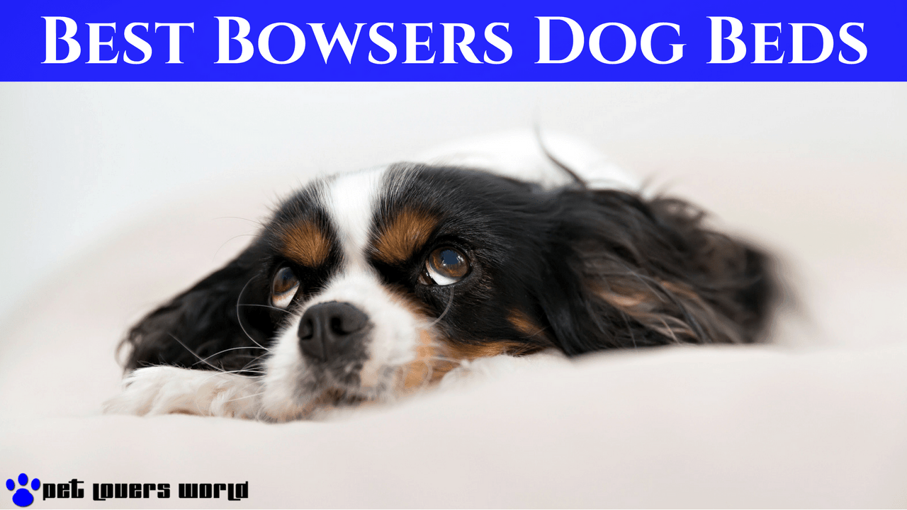 best bowsers dog beds on the market product reviews   pet  - best bowsers dog beds reviews