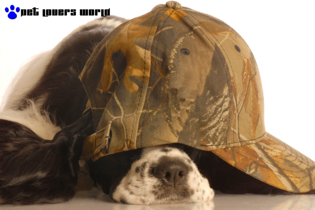 Best Camo Dog Bed Reviews