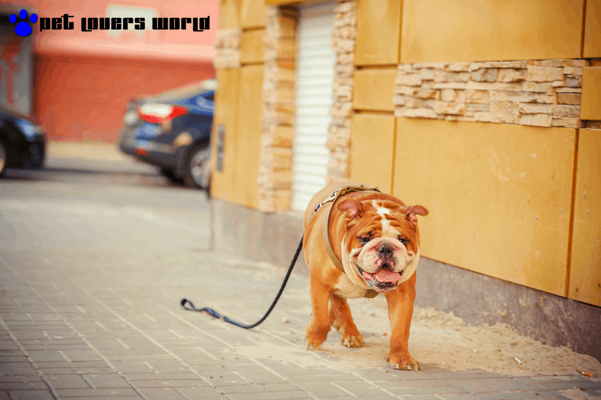 Best Dog Gps Tracker Reviews