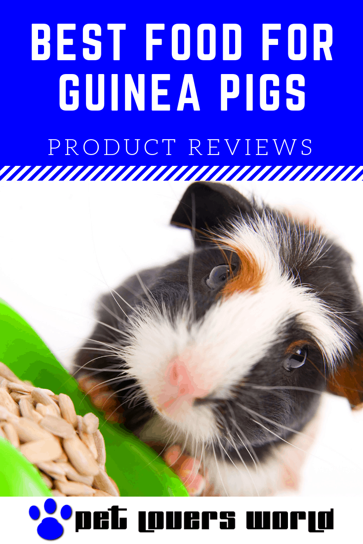 Best Guinea Pig Pellets Reviews Pinterest Image