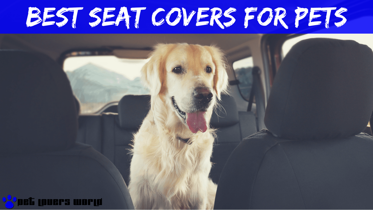 5 Best Seat Covers For Dog Hair Product Reviews 2018