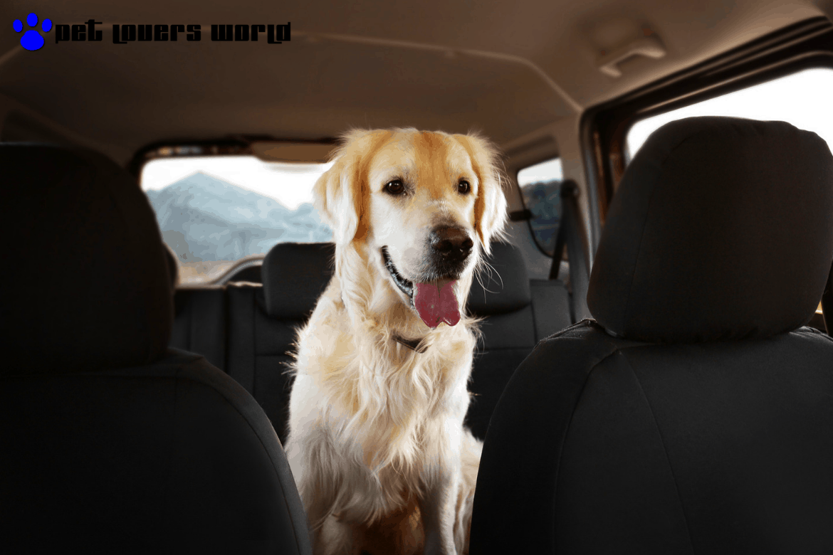 10 Best Seat Covers For Dog Hair Top Reviews 2019 Plw