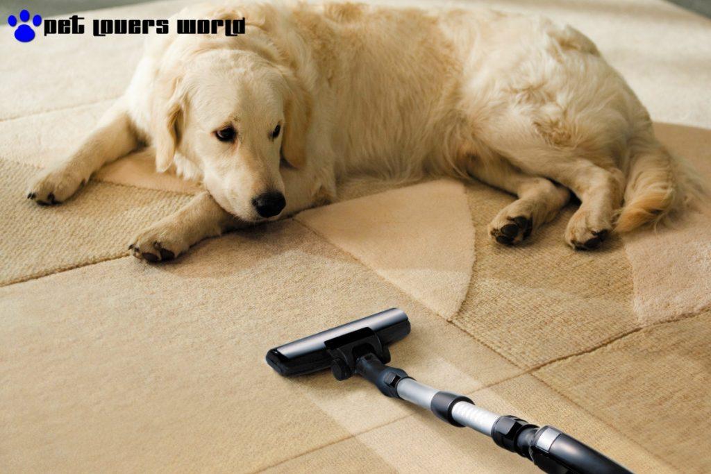 Best Vacuum Cleaner For Pet Hair Reviews