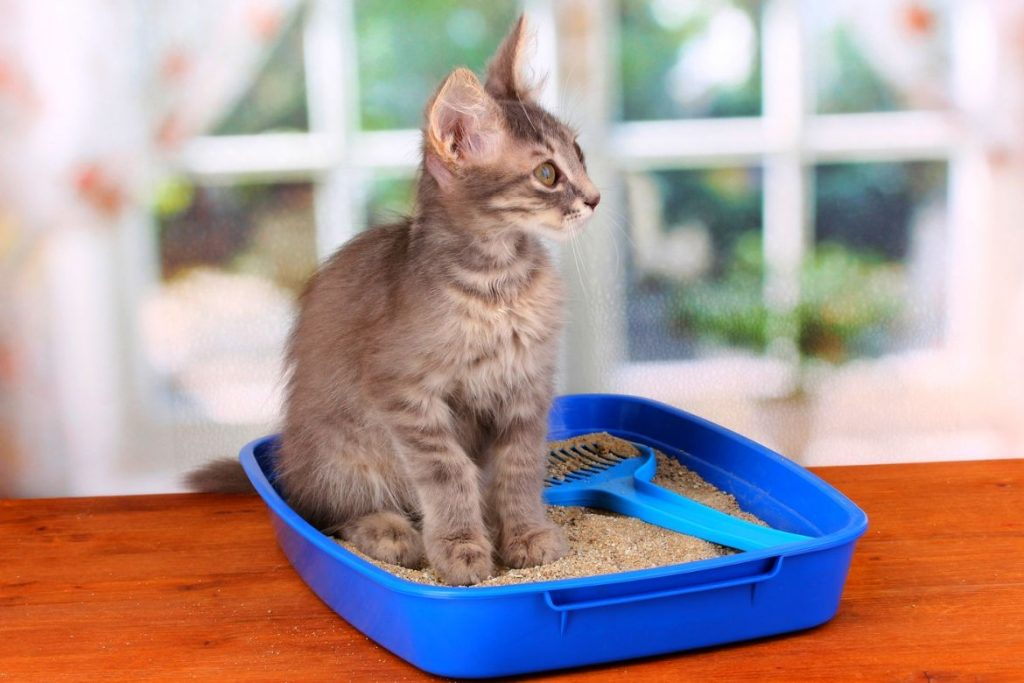 Best Place For Cat Litter Box Featured Image