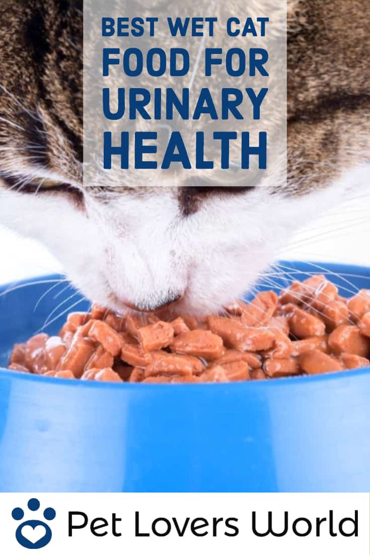 Best Urinary Tract Cat Food Pinterest Image
