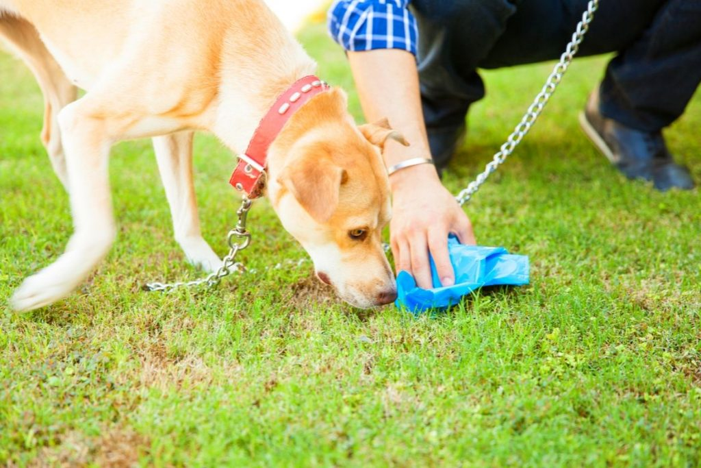 Why Do Dogs Eat Poop Featured Image